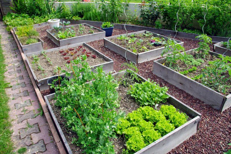 Die eetbare tuin