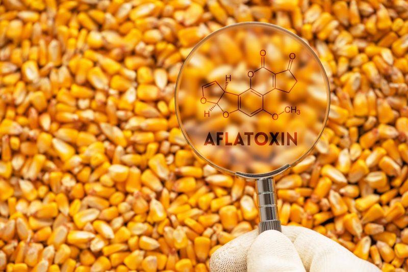 Die realiteit van aflatoksiene