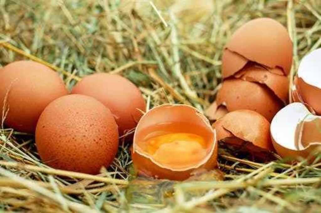 Xperiland eksperiment: Bonsende eier